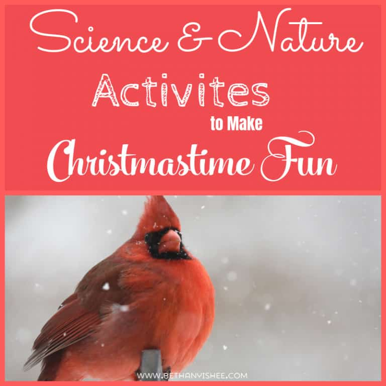 Science and Nature Activities to Make Christmastime Fun